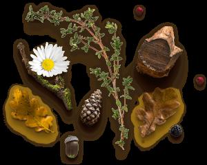 home_herbal_slider_pic