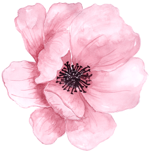 گل صورتی 1